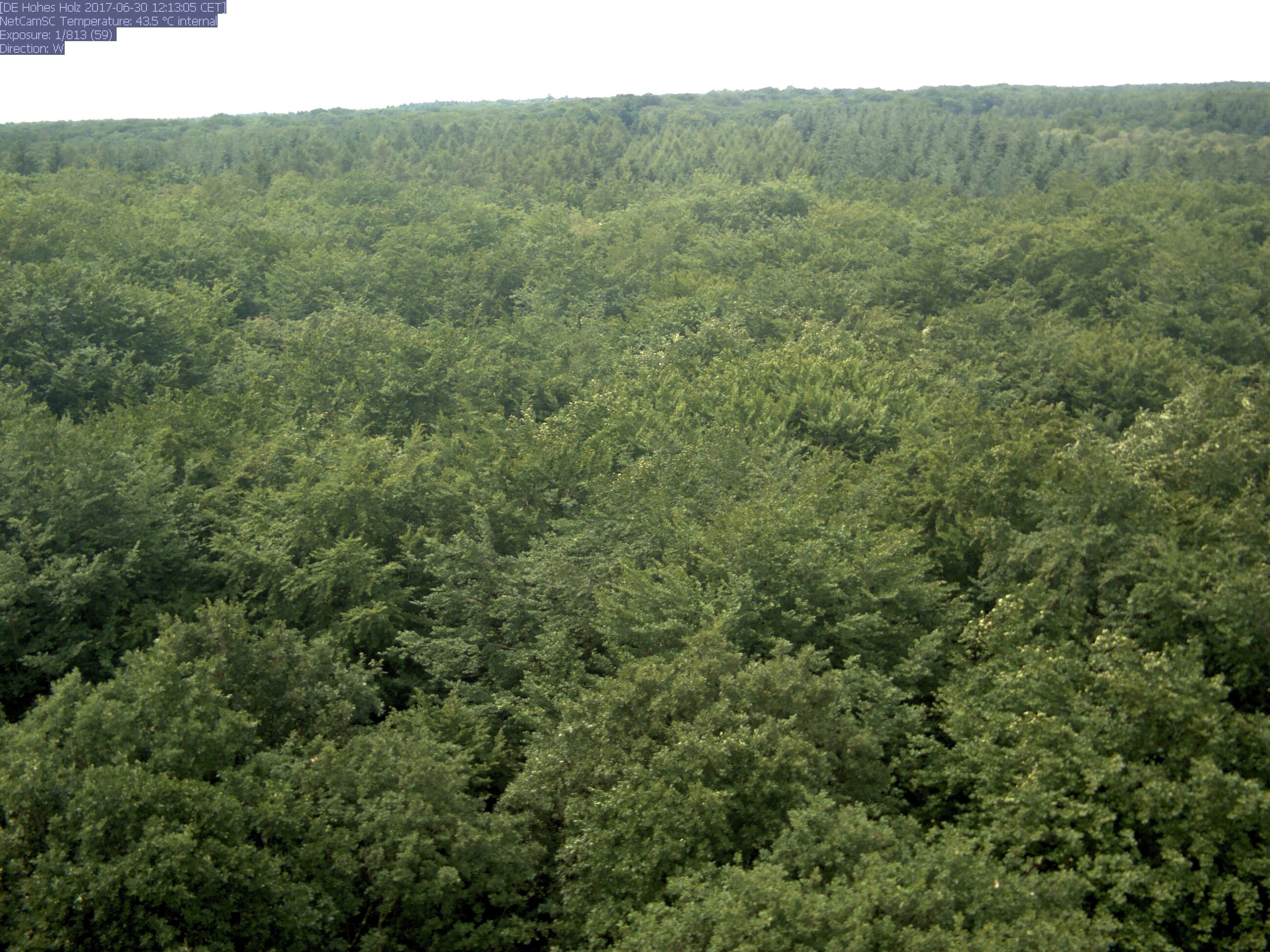 TERENO - view from Tower Hohes Holz